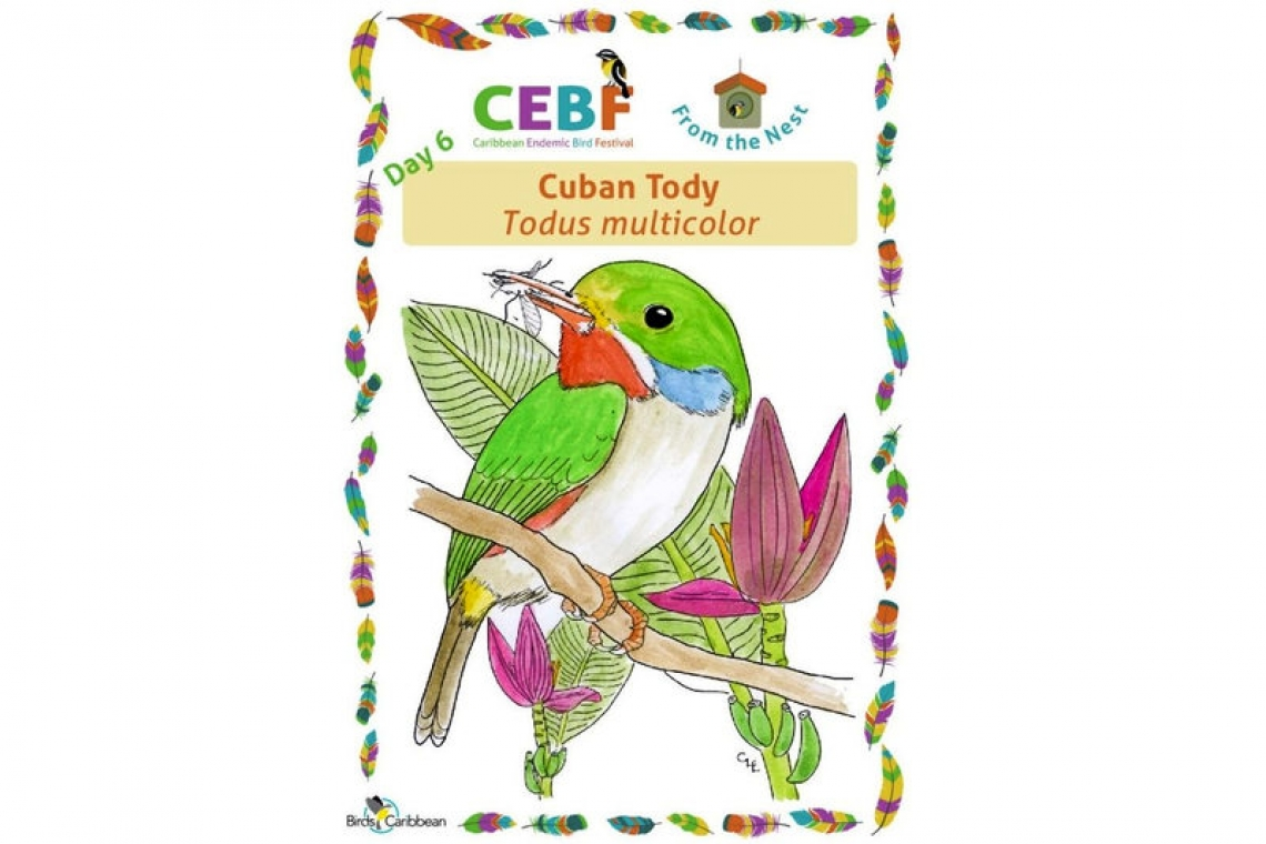We hope you're not missing out on this year's Caribbean Endemic Bird Festival