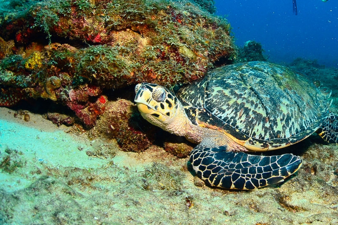 Know your Island's Sea Turtles – Part 1 of 2