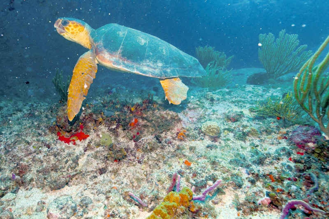 Know your Island's Sea Turtles – Part 2 of 2